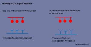 Antikörper und Antigene (schematische Darstellung)