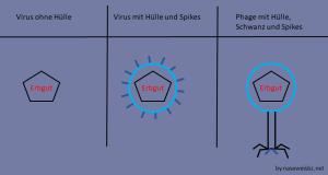 Verschiedene Virentypen: ohne und mit Hülle und mit Spikes