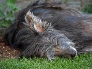 Schlafender Hund: Müde getobt oder reduzierter Stoffwechsel?