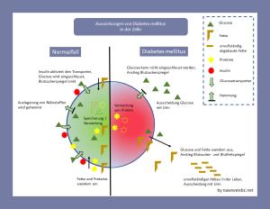Auswirkungen von Diabetes auf eine Körperzelle - veränderte Nährstoffzufuhr