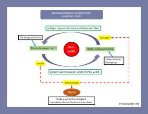 Die Produkte der exokrinen Bauchspeicheldrüse: Insulin, Somatostatin, Glucagon