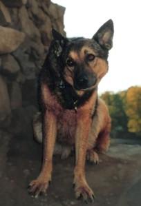 Hund mit schiefer Kopfhaltung: Verrückter Kopf oder Subklinische SDU?