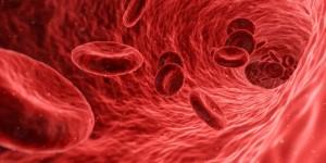 Blutzellen in derBlutbahn