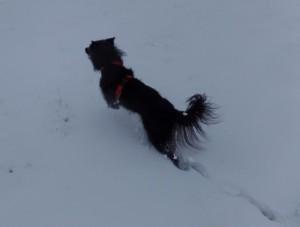 Hund im hohen Schnee: Bewegung im hohen Schnee ist auf Dauer sehr anstrengend