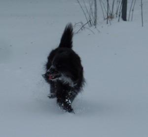 Hund im Schnee: Im Schnee herumzutoben macht den meisten Hunden viel Spaß