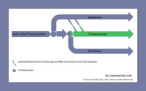 Grafik: Die 3 Domänen haben einen gemeinsamen Ursprung und sind z. T. über Querverbindungen vernetzt