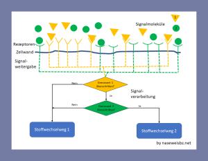 Grafik: Durch die Berücksichtigung verschiedener Signale können komplexe Bedingungen bewertet werden