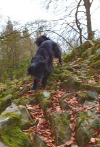 Hund im Berg