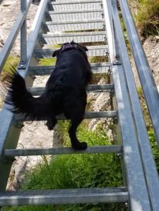 Hund steigt Gittertreppe hoch
