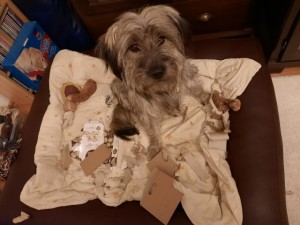 Hund hat Paket zerrissen