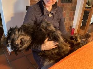 Hund schläft im Arm des Besitzers