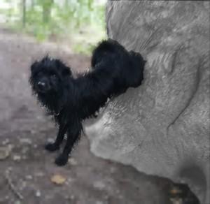 Hund geht rückwärts einen Felsen hoch