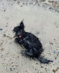 Hund wälzt sich im Sand