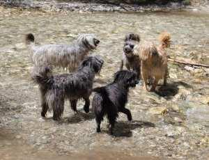 mehrere Hunde scheinbar im Gespräch