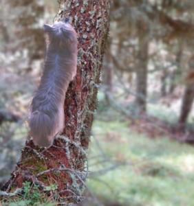 Hund kletter auf Baum