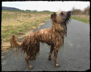 Dreckiger Hund