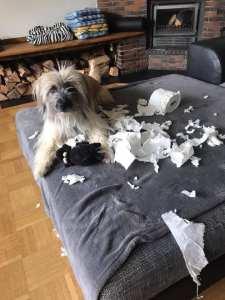 Hund hat Toilettenpapierrolle zerrissen