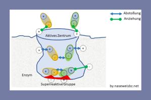 Grafische Darstellung: Das aktive Zentrum wirkt auf das Substrat ein.