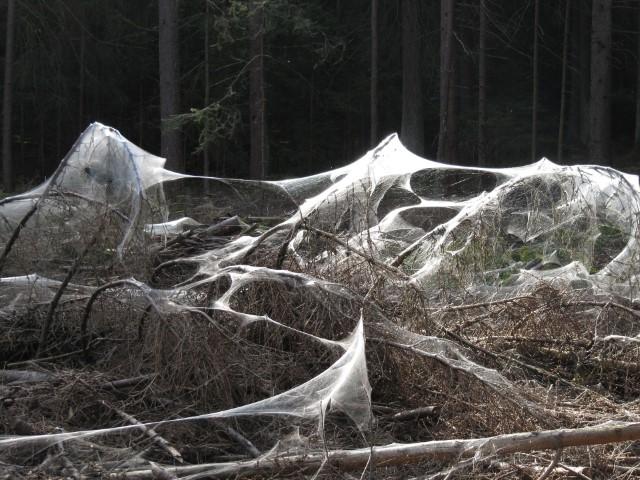Großes unregelmäßiges Netz im Gebüsch
