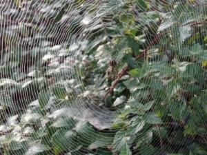 Radnetz mit einer lauernden Spinne
