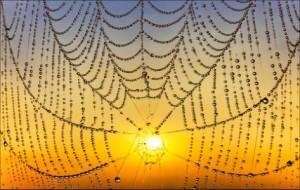Radnetz mit Sonne