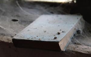 Altes mit Spinnenweben überzogenes Buch. Spinnenweben im Haus gelten als Zeichen für Unsauberkeit. Sie erfüllen aber auch hier ihre Funktion als Insektenfänger.