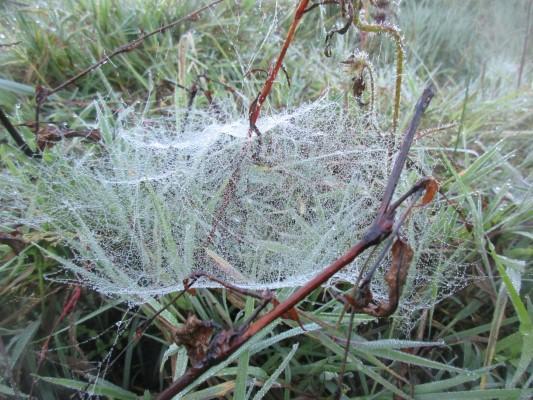 Unregelmäßiges Netz im Gebüsch